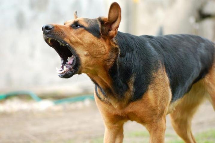 """Результат пошуку зображень за запитом """"чіповані собаки"""""""