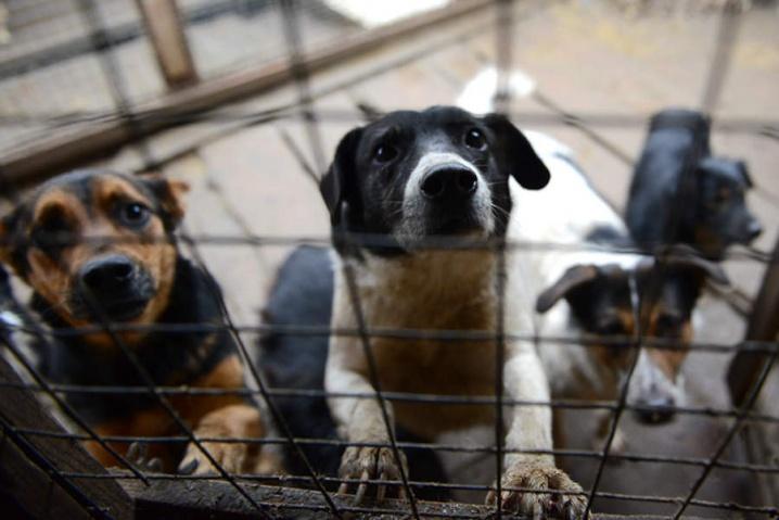 У Коломиї побудують притулок для тварин за 37 мільйонів гривень