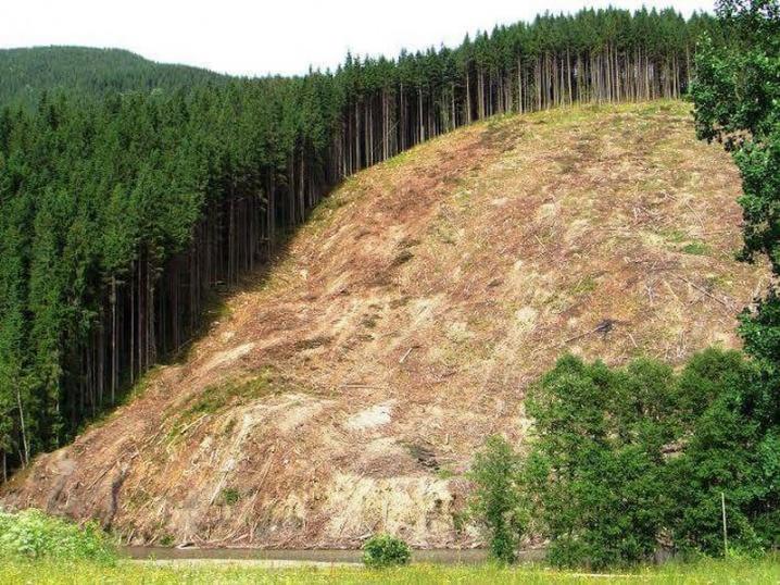 Парламент криміналізував незаконні рубки та вивіз карпатського лісу: хто з прикарпатських нардепів не голосував за закон?