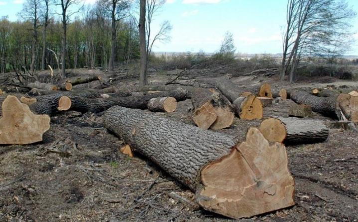 "Результат пошуку зображень за запитом ""Нарубав дров майже на 100 тис. грн."""
