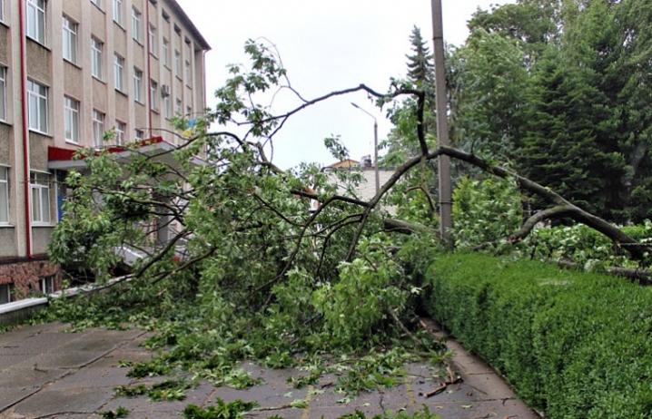 """Результат пошуку зображень за запитом """"впало дерево"""""""