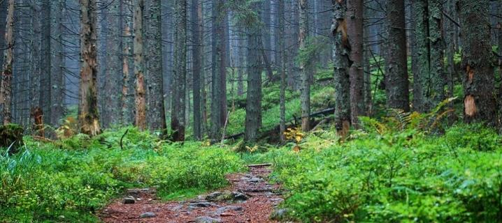 Картинки по запросу ліс Буковини