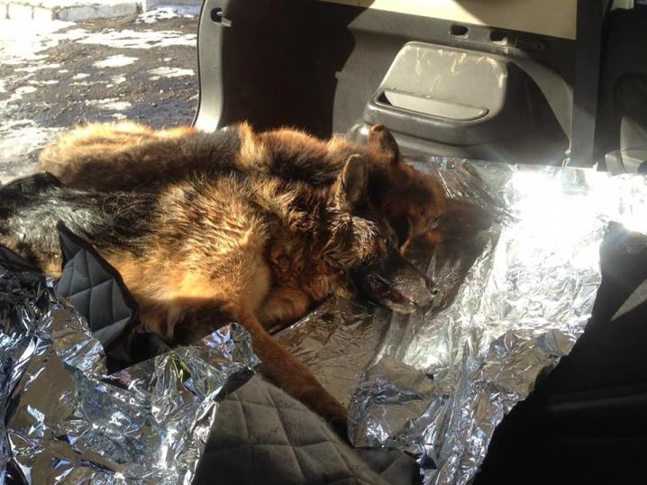 Буковинські патрульні врятували собак, які потрапили під колеса вантажівки