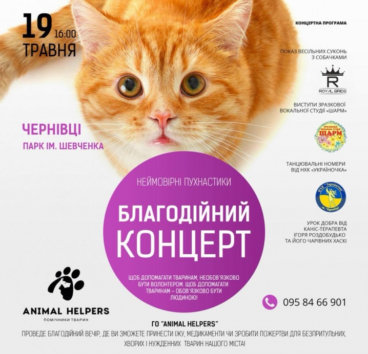 Неймовірні пухнастики: у Чернівцях пройде благодійний концерт на підтримку безпритульних тварин