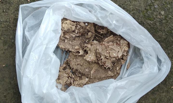 У дитсадку в Сторожинці рятувальники ліквідували гніздо з осами, які кусали дітей