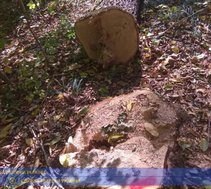 Посадовці Чернівецького лісгоспу незаконно продавали деревину