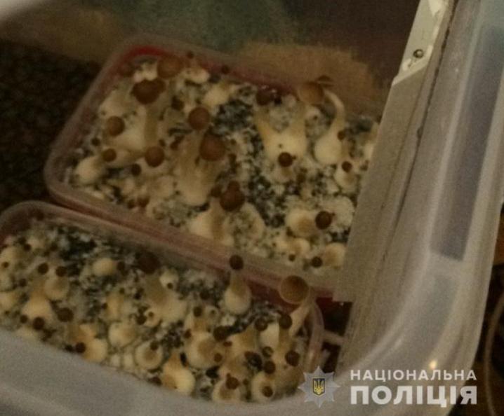 На Буковині затримали наркоторговців. Зловмисники збували наркотики через інтернет