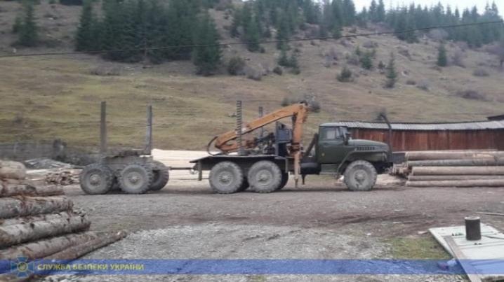 СБУ попередила експорт незаконно вирубаної деревини на понад 3 мільйони гривень