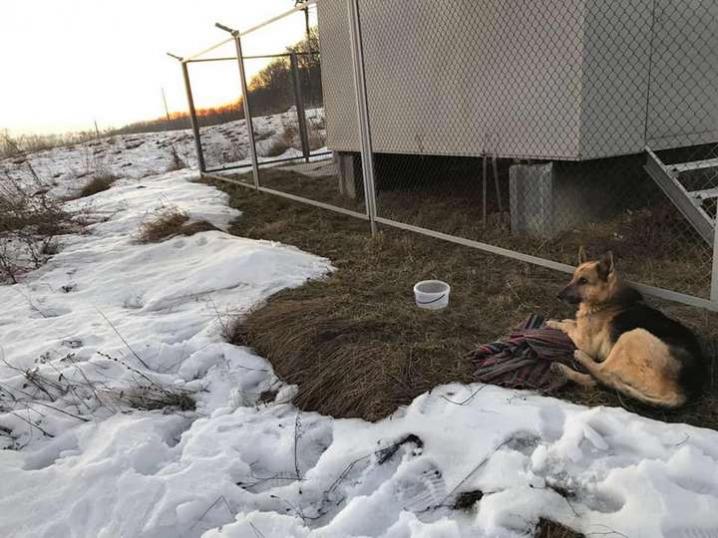 Волонтери просять допомогти врятувати собаку