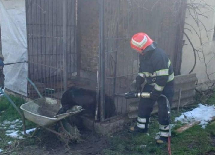 На Буковині рятувальники допомогли вибратись із пастки собаці