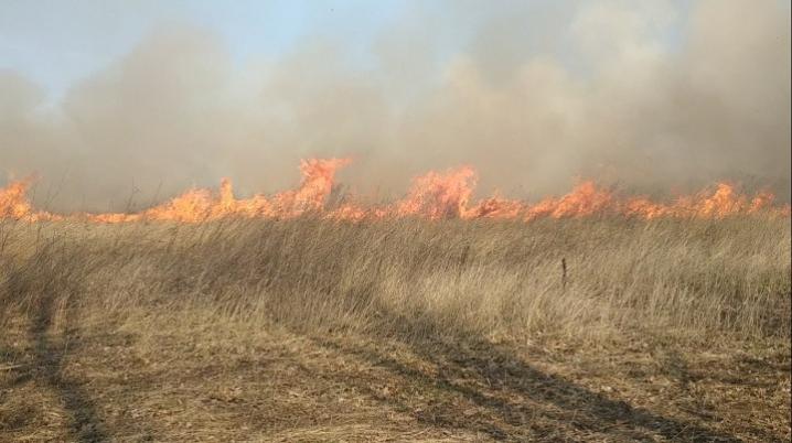На Буковині за добу 39 разів горіла суха трава