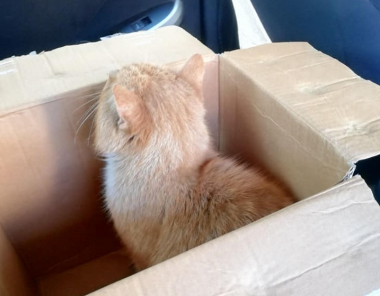 Чернівецькі патрульні допомогли врятувати життя коту