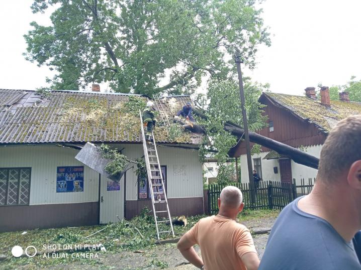Буревій у Глибоці: сильний вітер та дощ повалив дерева
