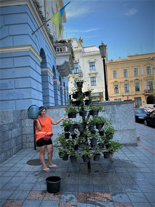 На Філармонії та Центральній площах оновили клумби та квітники