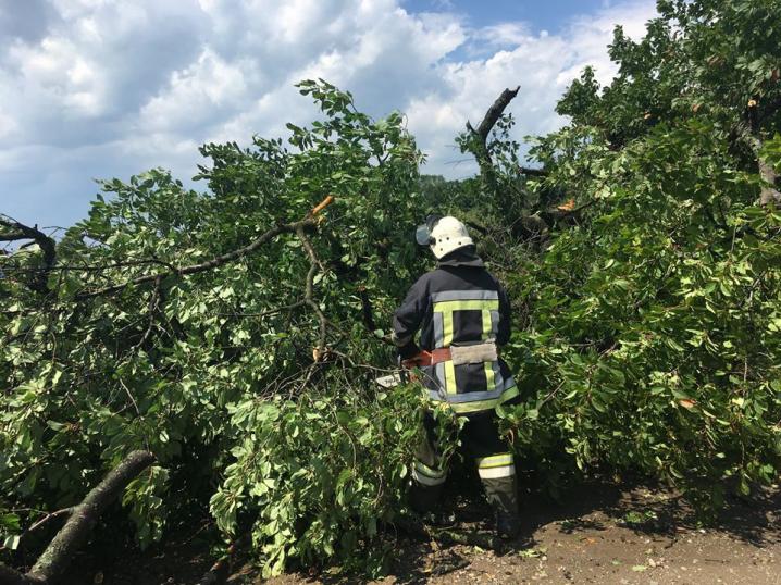 На Буковині рятувальники прибрали повалені внаслідок негоди дерева