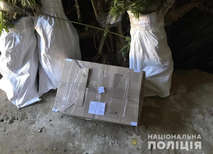 На Буковині у чоловіка конфіскували 155 кущів конопель