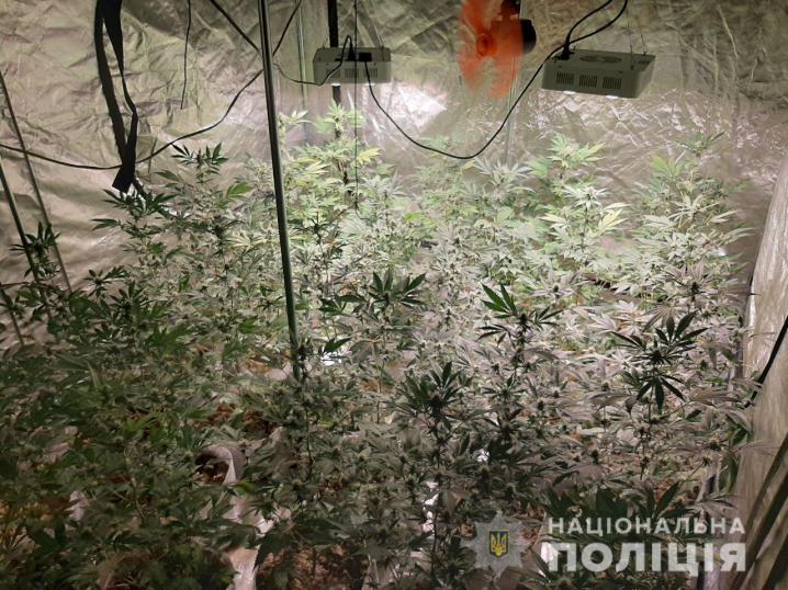 У Новодністровську поліцейські викрили незаконне вирощування нарковмісних рослин