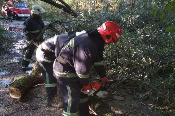 У Чернівецькій області прибрали дерева, які впали на дорогу через негоду