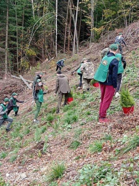 На  Буковині долучилися до акції озеленення країни та висадили 60 тисяч дерев