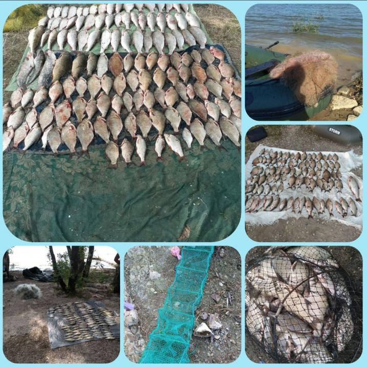 У 2020 році рибпатрульні Буковини виявили порушень на понад 1 млн грн збитків