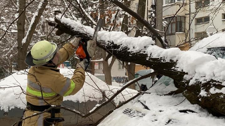 У Чернівцях на припаркований автомобіль впало дерево