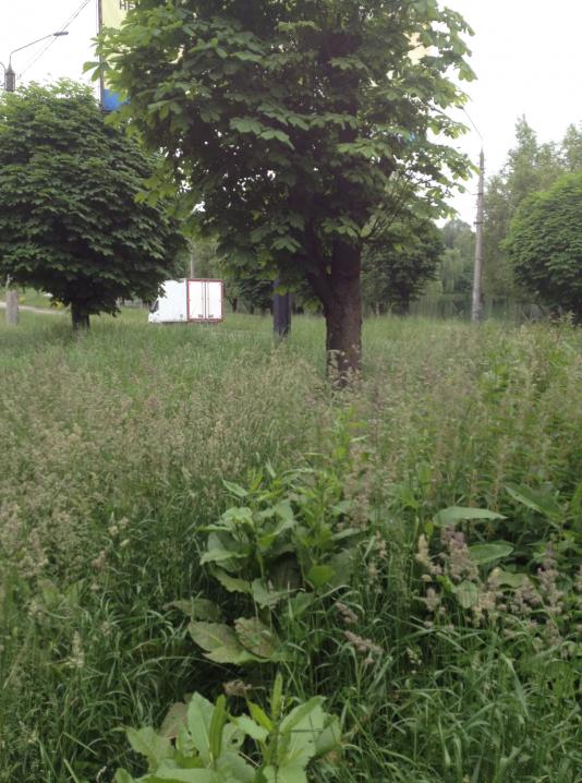 Через траву вже не видно тротуарів та доріг: комунальники не можуть навести лад у Чернівцях