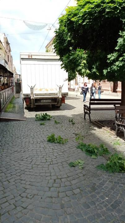 На вулиці О.Кобилянської вантажівка зламала кулястий клен