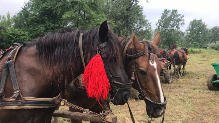 """У Стрілецькому Куті відбувається видовищний фест """"Коні мої, коні"""" (фото)"""
