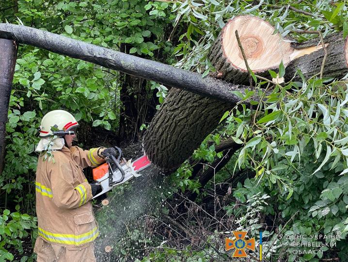 Через негоду у Чернівцях дерево повалилось на газову трубу