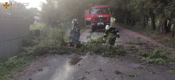 Повалені дерева та обірвані дроти: наслідки негоди на Буковині