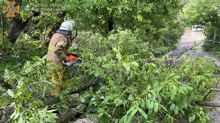 На Буковині негода повалила понад півсотні дерев: найбільше рятувальники працювали у Чернівцях
