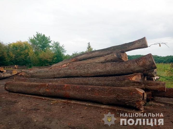 На Буковині вилучили 200 дерев, які вирубали незаконно